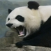 Vengeful Panda