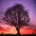 Treebeard's Ghost