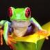 treefrog1996
