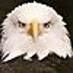 eagle22